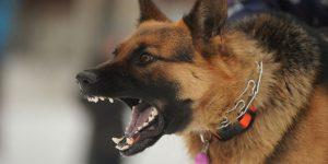 dog bite injury attorneys